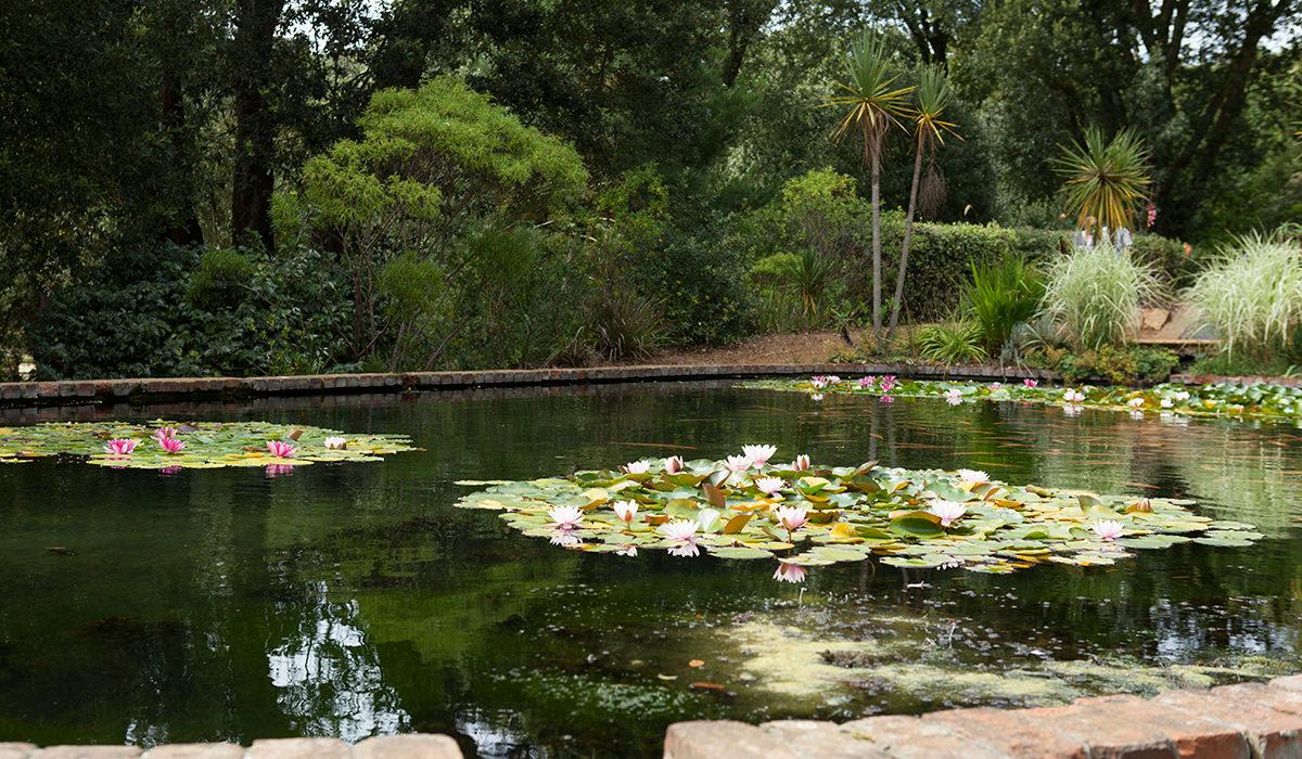 Abbotsbury Subtropical Garden Wedding 2